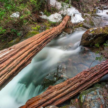 characteristic: Fallen Cedars