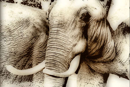 Elephant in Sepia