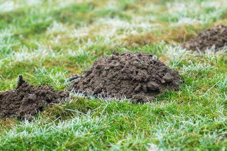 Mole hill on a meadow