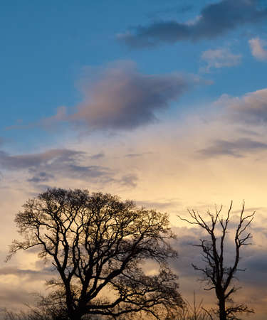 pflanzen: Silhouette of two trees before a dramatic evening sky Stock Photo