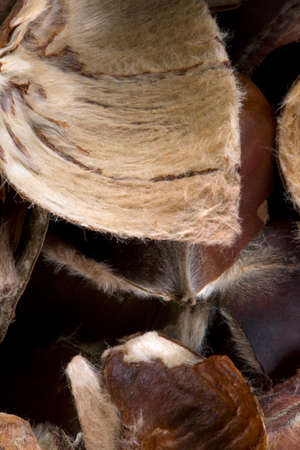 Chestnut peels background.