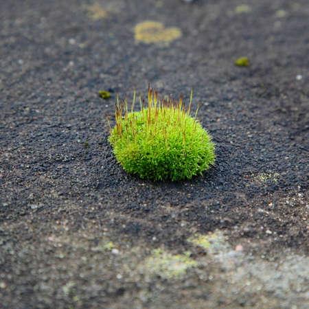 Green moss on grey stone photo