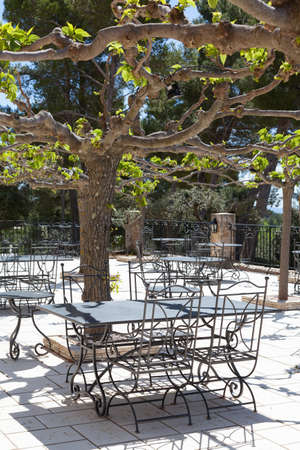 Empty outdoor cafe under mulberry trees photo