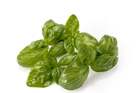 basil from Genoa with fresh green glossy leaves isolated on white background Archivio Fotografico