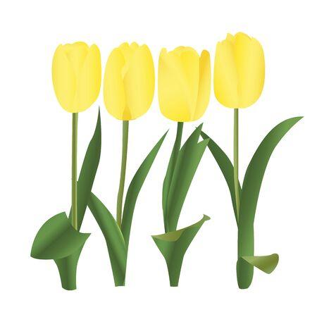 Spring yellow tulip vector illustration