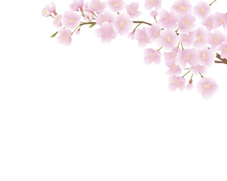 Cherry branch background painted in vector Illustration