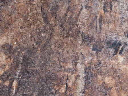skin of buffalo textured for drumhead photo