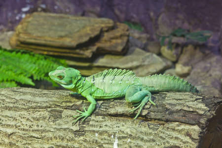 little lizard on a stick photo