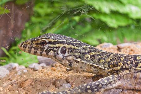 little lizard in glass photo