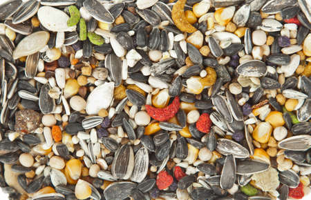 room for your text: Bird food background