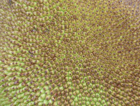 Jackfruit texture background photo