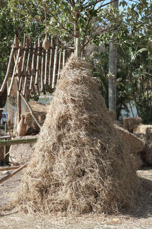 Pile of rice straw as triangle