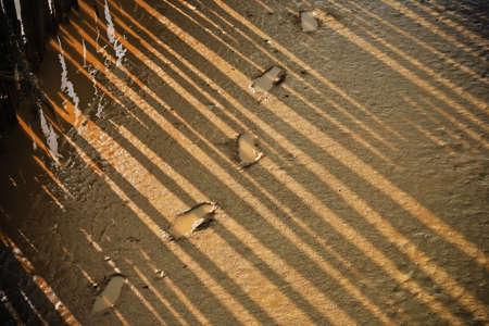 Einbuchtung: Fu�abdruck im Mangrovenwald