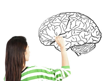 woman drawing human brain diagram Stock Photo - 14171764