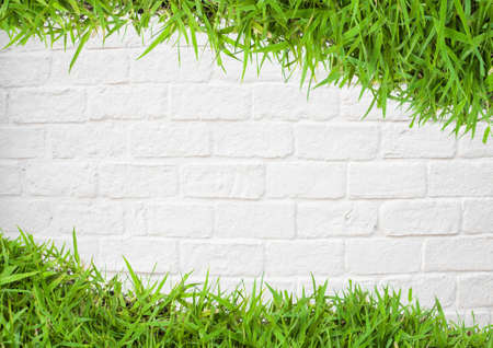 green grass on wall photo