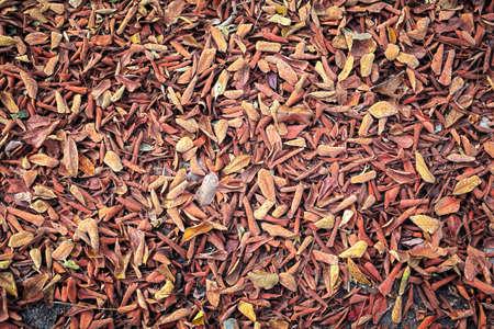 dead leaves: muertos seco seco de hojas de antecedentes