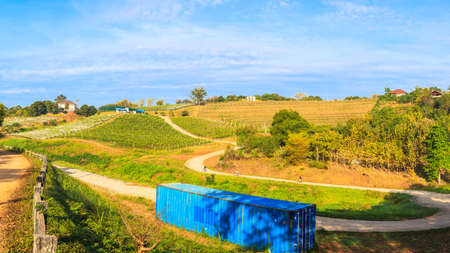 vineyard landscape as panorama view photo