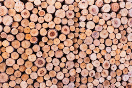 wood log texture background
