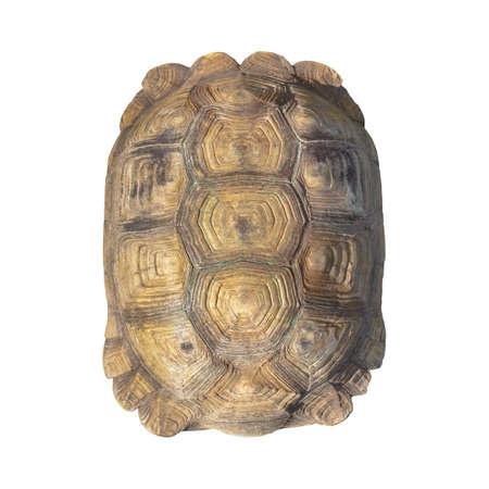 schildkröte: Schildpatt braune Farbe von Riesenschildkröte auf weißem Hintergrund, closeup