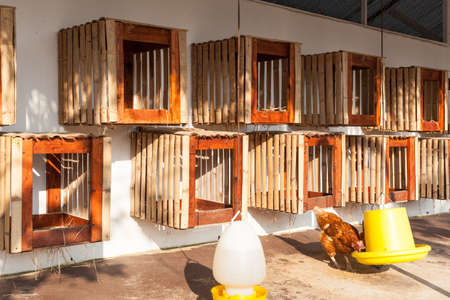 henhouse: hen house farmyard, hanged on wall for chicken hatch Stock Photo