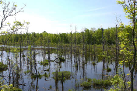 Flooded Wetland With Trees photo
