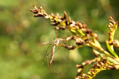 Crane Fly In Morning Dew photo