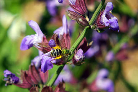 Purple Flower With Metallic Green Bee Stock Photo - 7145503