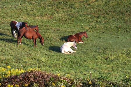 Horses in morning sun Stock Photo - 7773517