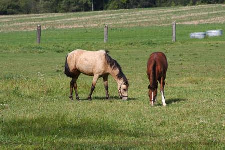Horse in morning sunlight