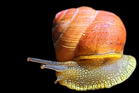 what to eat: Snail U-turn Stock Photo
