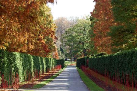treelined avenue Stockfoto