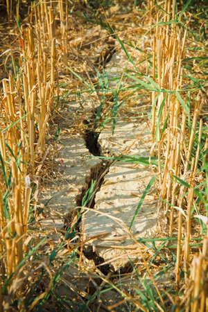Resultado de imagen de sequia trigo