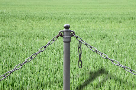 No cultivations that use genetically modified seeds