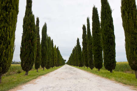 Country Tuscany road with cypresses