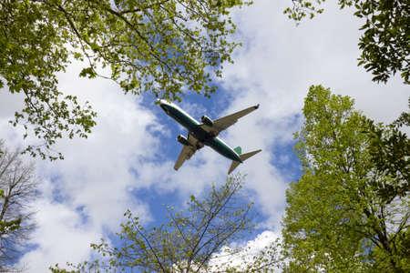 foliage tree: Airplane