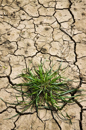 infertile: Infertile land burned by the sun: famine and poverty concept