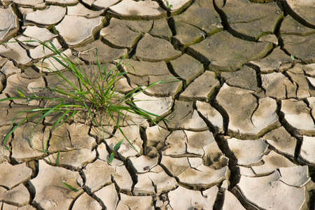 Infertile land burned by the sun: famine and poverty concept
