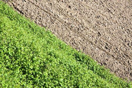 plowed field: Plowed field in spring