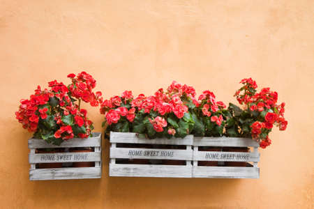 Flowers boxes hanging on the wall - Home sweet home written on wooden box