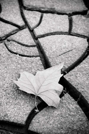 barrenness: Isolated dry leaf on the ground - concept image