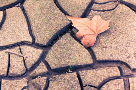 pessimism: Isolated dry leaf on dry ground - toned image Picture useful to express the concepts of: life; death; melancholy; sadness; pessimism; hope; and so on ...