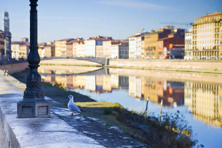 river arno: Seagull on banks of river Arno, Pisa (Tuscany - Italy) - In the background you can see the most important bridge called Ponte di Mezzo completely built in marble.