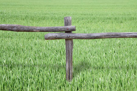 demarcation: Wooden fence in a field planted with pasture