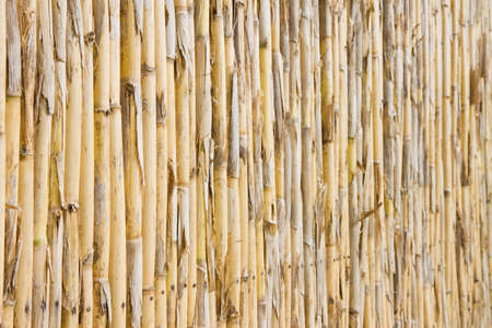 division: Lath work separation. Useful image to express also the concepts of:   division, barrier, protection and so on... Stock Photo
