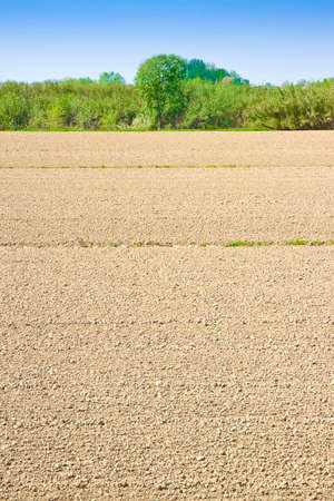plough: Plough agriculture field before sowing - Plowed field background with copy space
