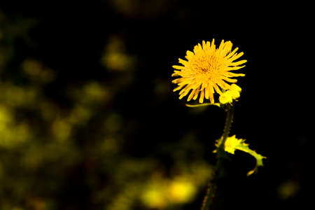 nuance: Yellow flower on a dark background with copy space