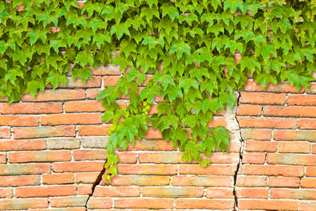 foundation cracks: Cracked brick wall with climbing ivy - image with copy space