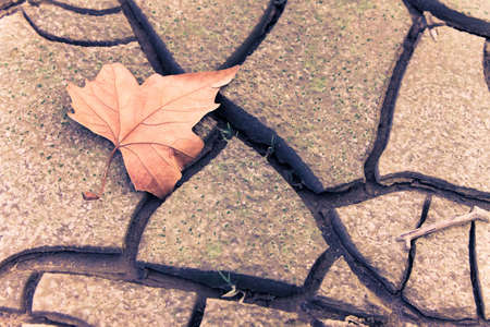 barrenness: Isolated dry leaf on dry ground - toned image Picture useful to express the concepts of: life; death; melancholy; sadness; pessimism; hope; and so on ...