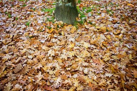 hojas secas: Las hojas secas caídas en el suelo - concepto