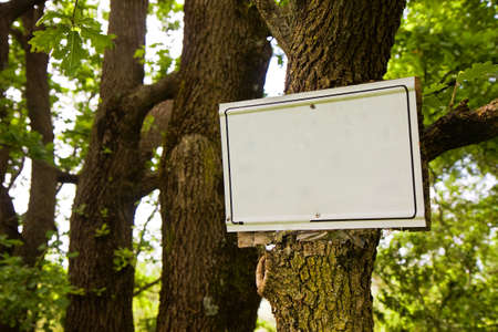 Blank sign indicating hanging on the tree trunk in the woods - image with copy space Stock Photo